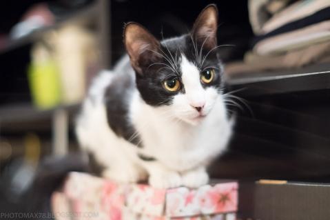 cat, olympus om 50/1.4